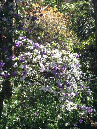 Burle Marx Park: arbustos floridos