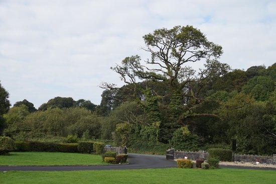 Bunratty Villa: the lane way and entrance