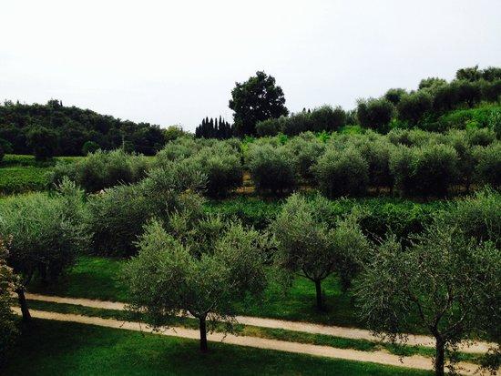 Agriturismo Fontanelle: Vista dalle camere