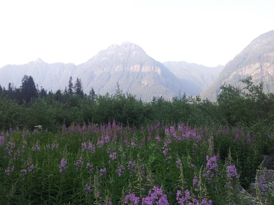 Big Four Ice Caves: Wildflowers galore.