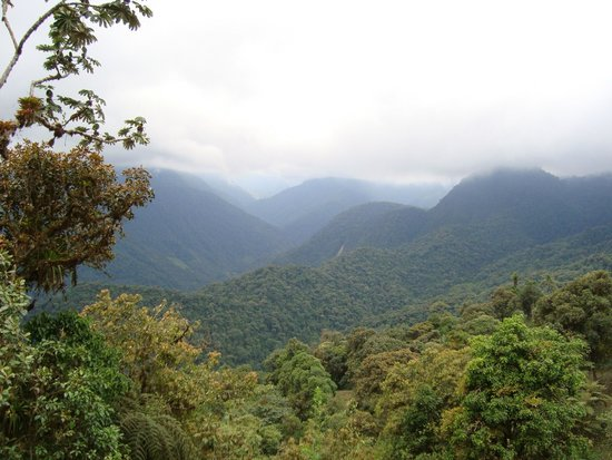 Mindo Cloud Forest Day Tours : Mindo Cloud Forest - Richard Hernandez