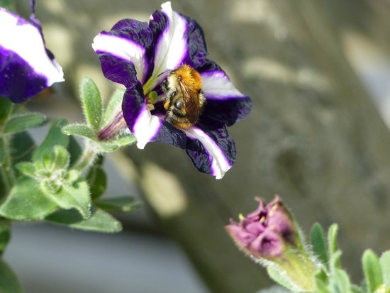 Country Ways Holiday Cottages: Check out the Buzzy bees!!