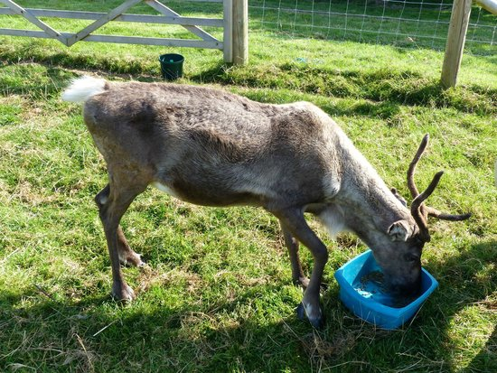 Country Ways Holiday Cottages: Reindeer!! No way!!
