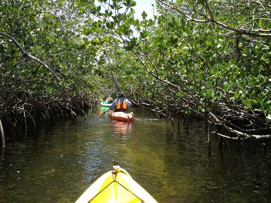 Shurr Adventures Everglades: This ain't your average kayaking, this is way better.