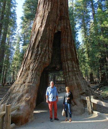 Golden Horizon Tours Giant Sequoias In Yosemite Mariposa Grove