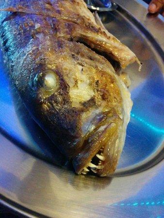 Gorgona: Fish