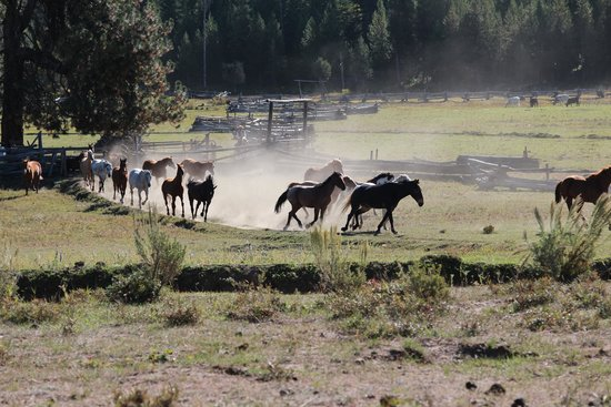 4D Longhorn Guest Ranch : Every morning, getting the horses in. We all loved that moment.