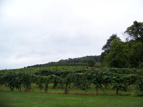 Adams County Winery: Vineyard