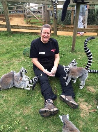 Zookeeper for a day at Whipsnade zoo: up close with The Lemurs