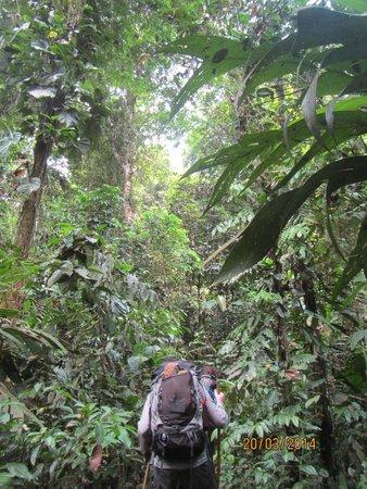 Darien Gap Panama: yes, we are trekking in this