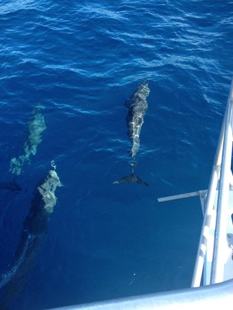 Hackshaw's Boat Charters: seen some dolphins
