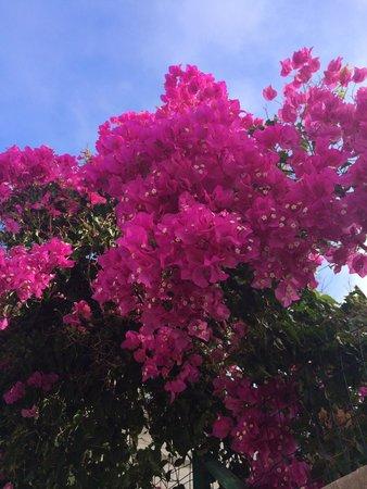 Albufeira Jardim - Apartamentos Turísticos : Pretty!