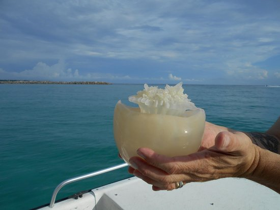 Aquatic Adventures: Experiencing a Jellyfish