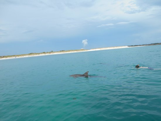 Aquatic Adventures: Snorkeling with the Dolphins