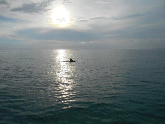 Aquatic Adventures: Fin in the Sun