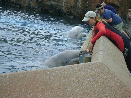 Promo marineland rencontre avec les dauphins