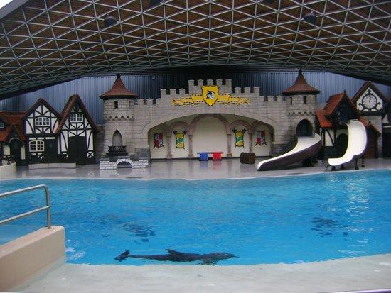 Rencontre dauphin marineland avis