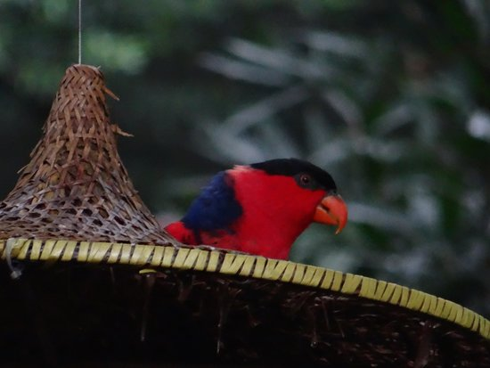 Hong Kong Park: Bird in aviary