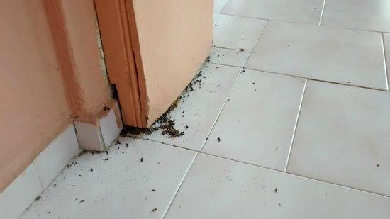 Theo's Hotel : Anyone like ants?