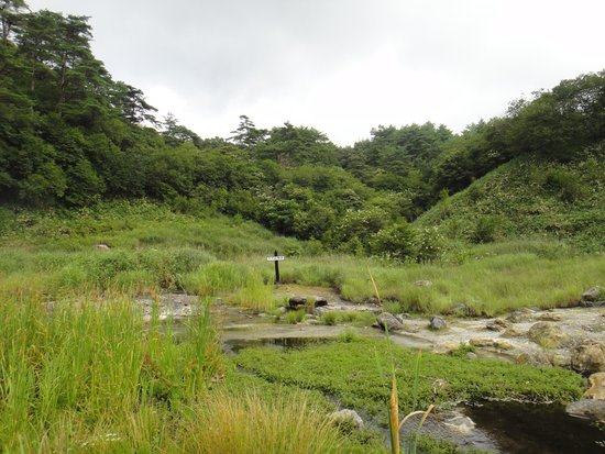 Seiryu no Mori (Suzume Jigoku)