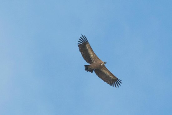 Barcelona Birding Point - Day Tours