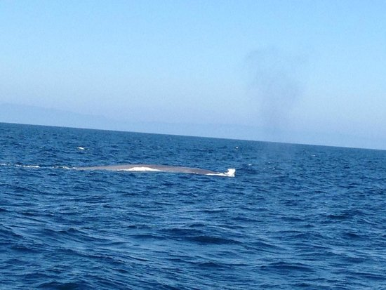 Dolphins Picture Of 2seewhales Harbor Breeze Cruises Long Beach Tripadvisor