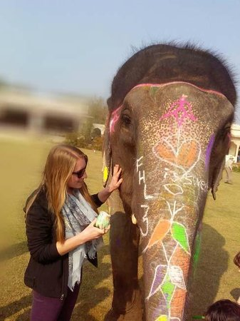 Elephant Safari in Jaipur