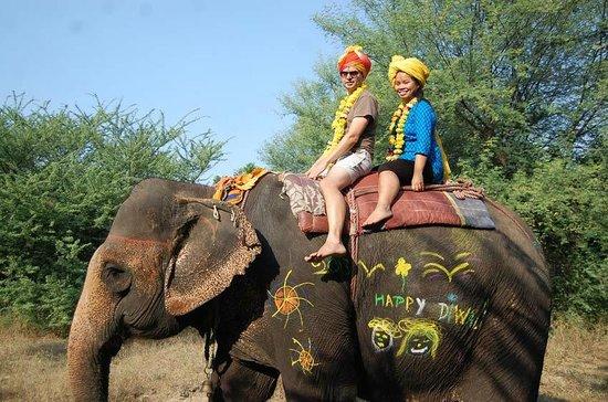 Elephant Safari in Jaipur