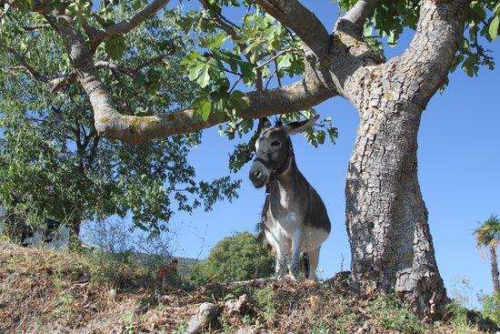 Hotel Rural Masia La Mota: Nature, and serenity