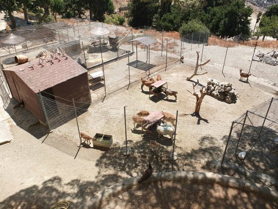 Moni Preveli Monastery: зоопарк