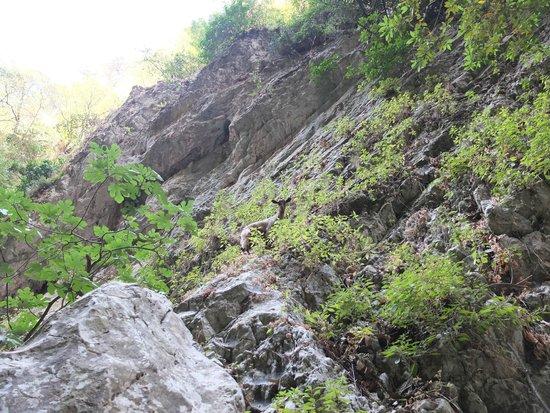 лесенка - Bild från St. Anthony Gorge, Rethymnon - TripAdvisor