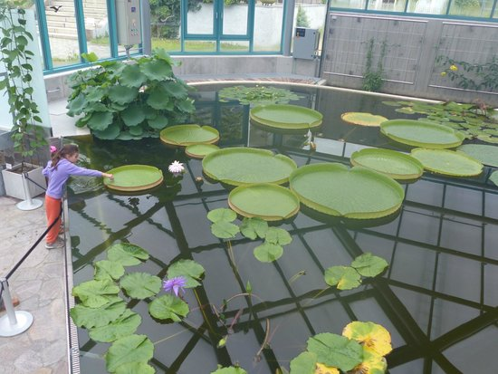 the indoor water plant view Picture of Liberec Botanical Garden