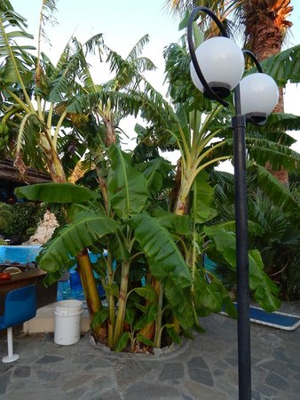 Garten/ Poolbereich