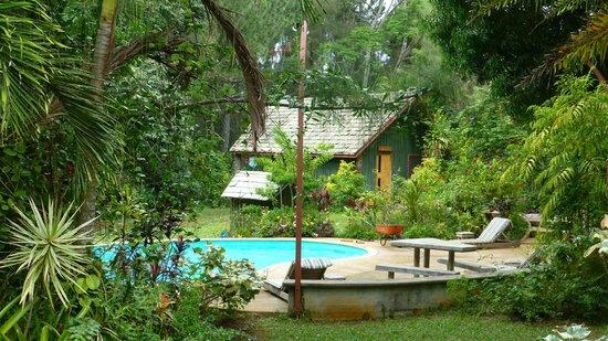 Atiu Villas: Garten mit Pool