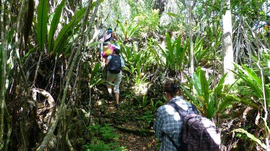 Anatakitaki Cave (Kopeka Cave): Wanderung zur Höhle