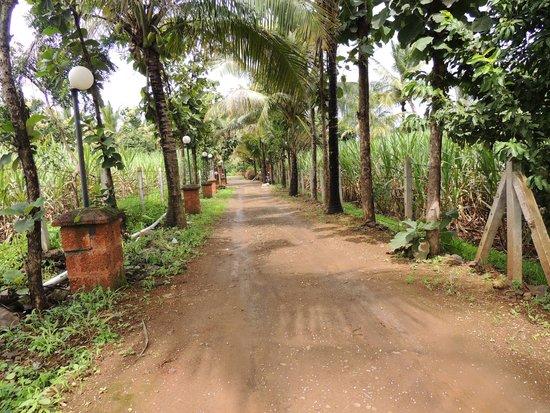 Heritage Resort: Road leading to the resort