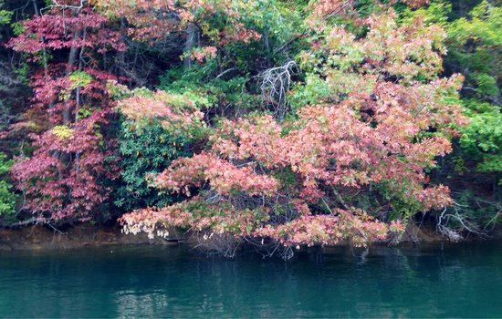 Jocassee Lake Tours: Fall on the lake is breath-taking.   You will be on visual overload!