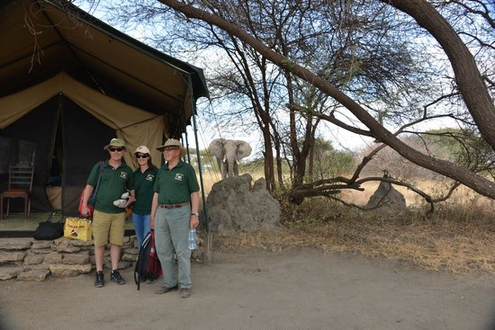 Manyara Ranch Conservancy: Elephant in Camp!
