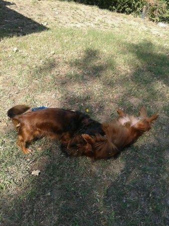 Villaggio Colombo: equesti o miei cuccioli che giocano liberi in giardino!! la felicità !!!!