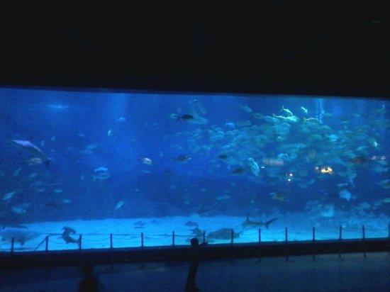 海昌烟台鲸鲨馆