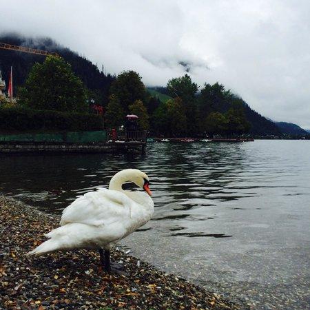 Lake Zell : 13/9/2014