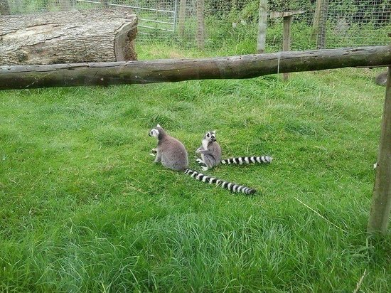 Axe Valley Wildlife Park: Lemur enclosure