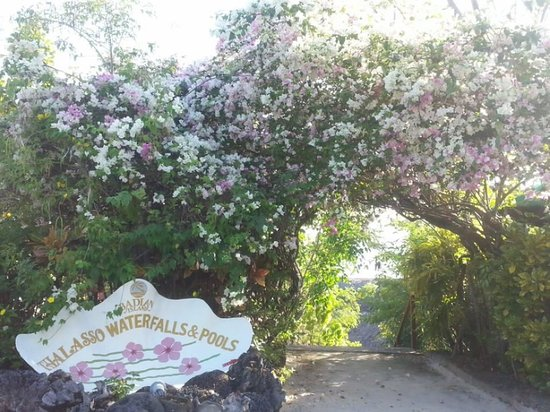 Badian Island Wellness Resort : wonderful area