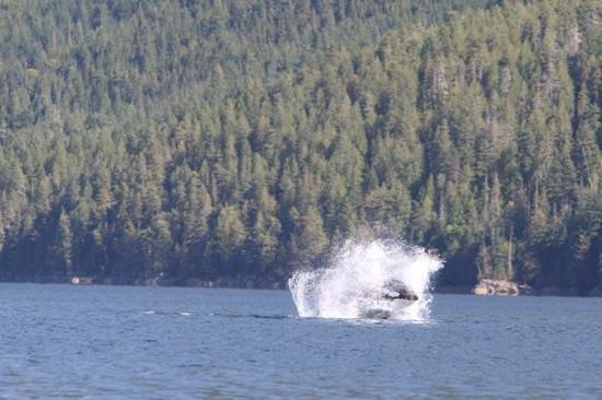 Adventure Quest Tours Canada Inc- Day Tours: A whale of a splash !