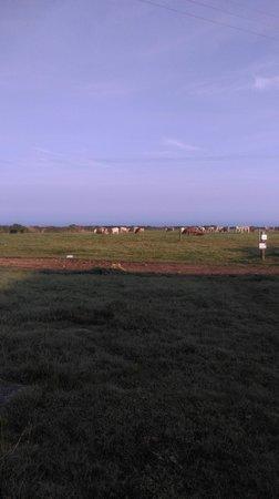 Trevalgan Holiday Farm: View