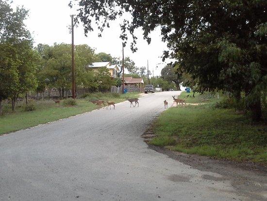River Front Motel: le matin de bonne heure