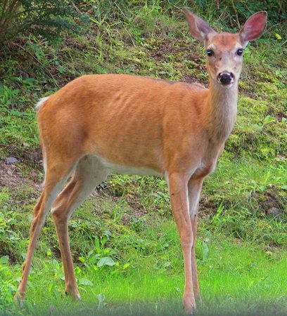 Great Swamp National Wildlife Refuge: Deer