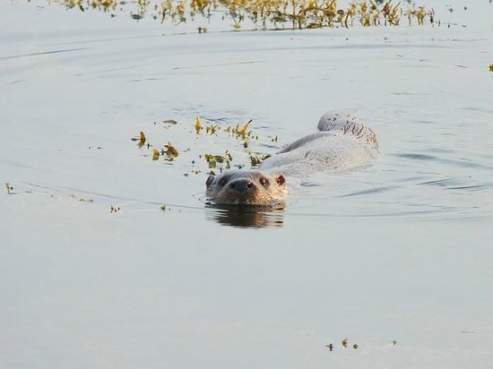 Seafield Farm Cottages : Perfect For The Otter Spotter