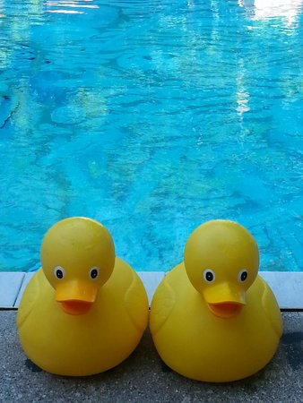 Sherwood Forest Bed and Breakfast: Rubber Duckies at the pool keep you afloat & happy