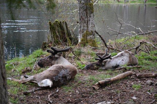 Northwest Trek Wildlife Park: northwest trek